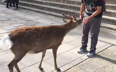 奈良公園でボール遊びはいいの?犬の散歩やお弁当は?