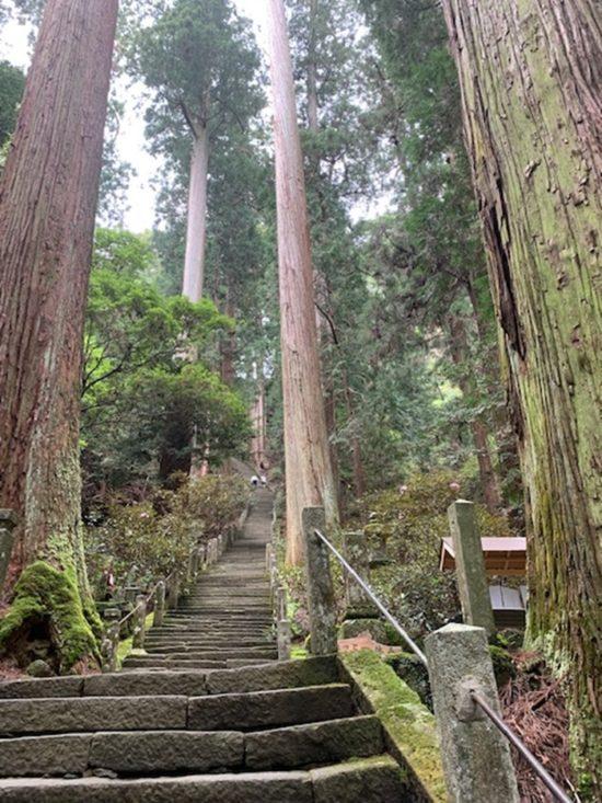 室生寺の奥の院への階段は膝の悪い人には無理?所要時間と特別開帳って?